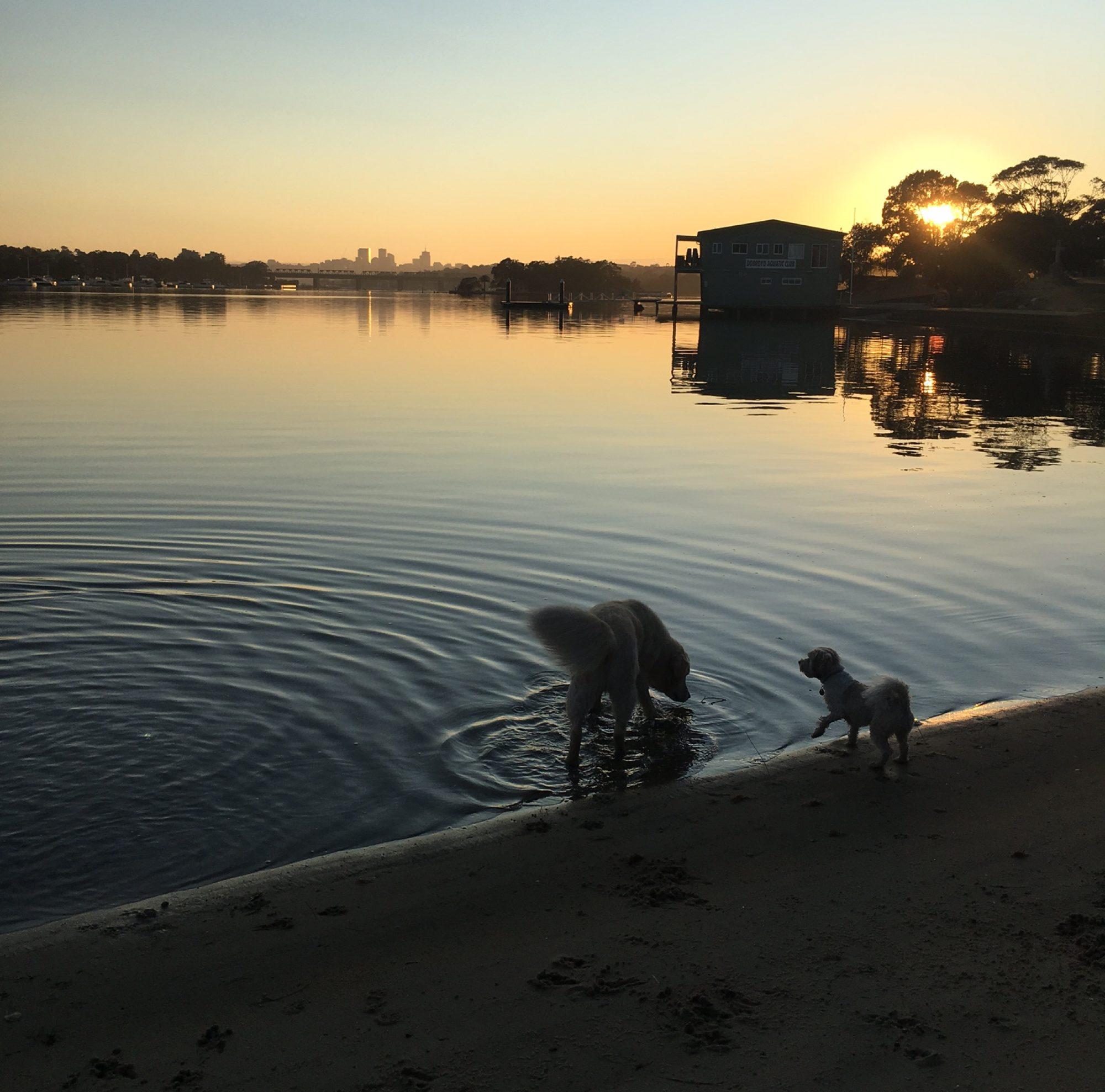 DOGS OF SYDNEY